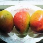 mangoes-DSC06215