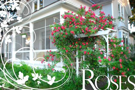 Rose-Arbor-DSC_0002