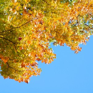 leaves1-DSC_0293