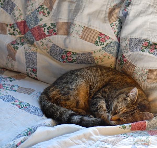 kitty!-DSC_0016