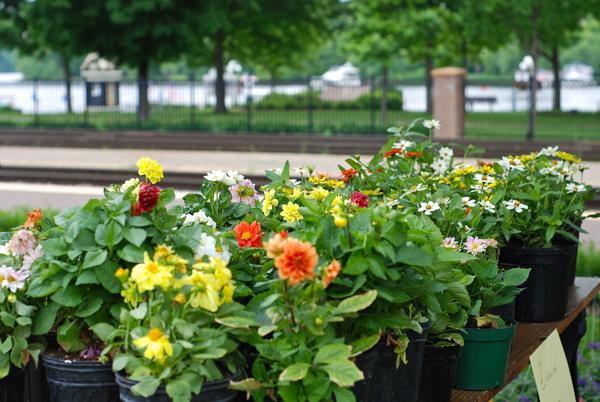 farmersmktflowers-DSC_0063