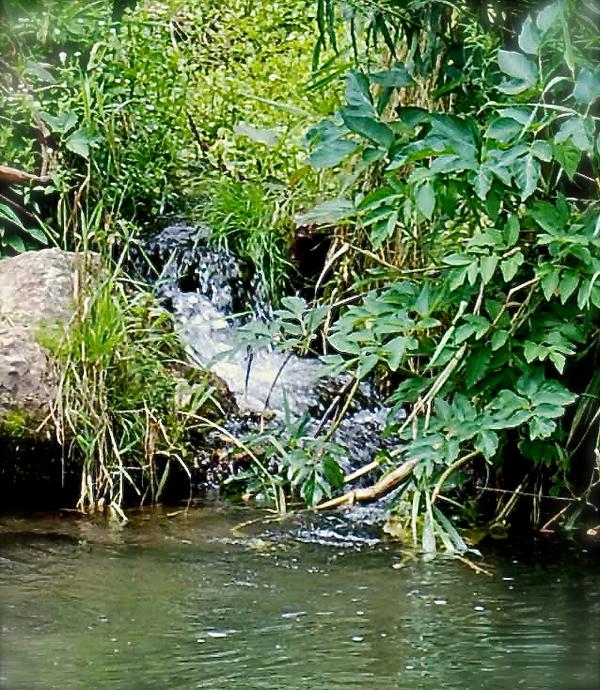 naturalspring