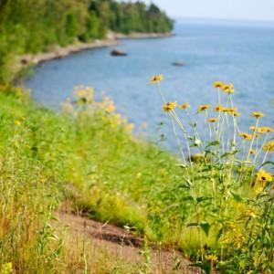 lakeflowers2