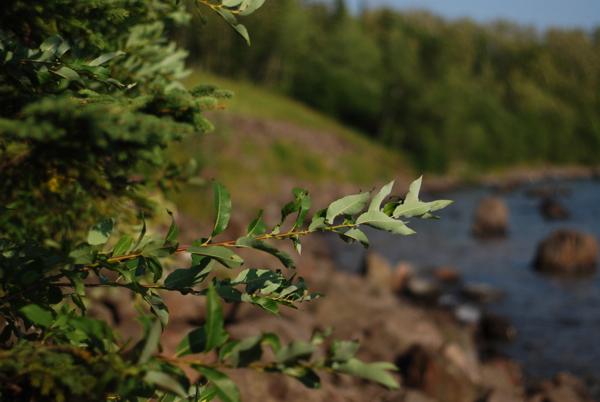 treeshore