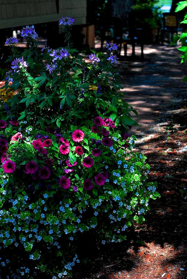 dockflowers