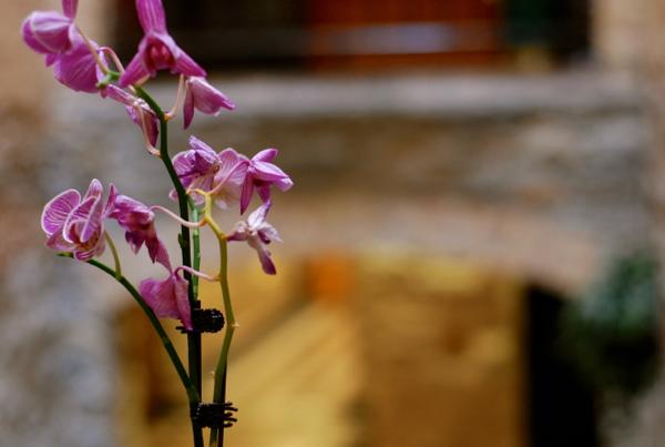 blairorchid