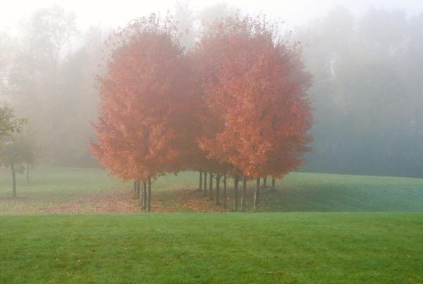 mistytrees1