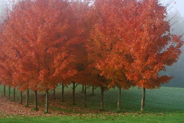 mistytrees2