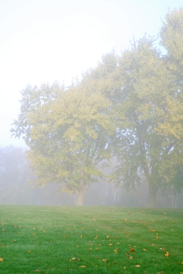 mistytrees3