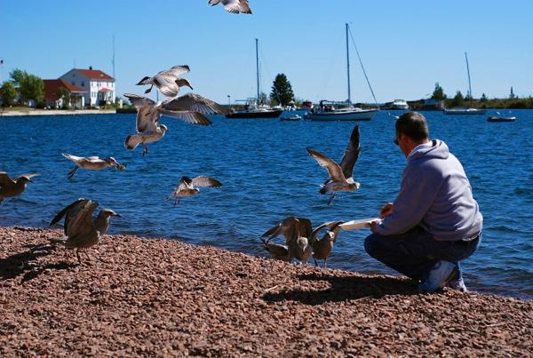 jeffseagulls2