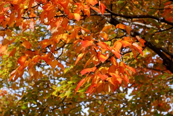 leaves2015