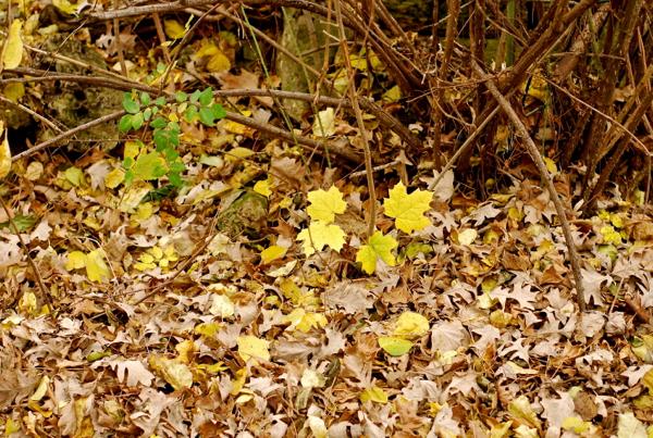 leavesvinesfinal