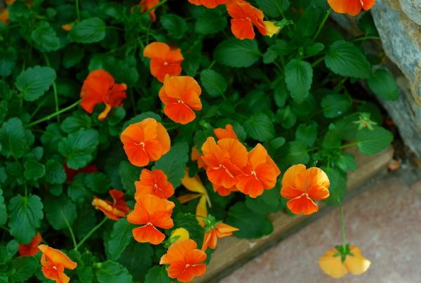springflowers6