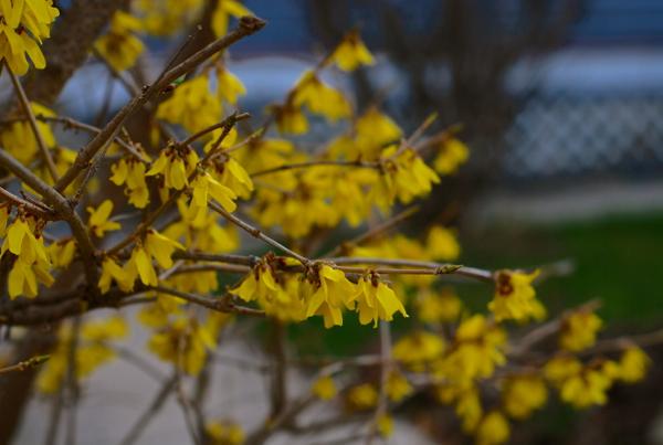 springyellowflowers