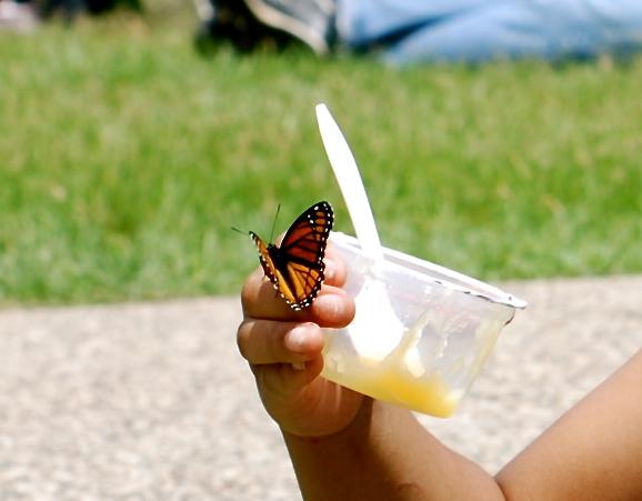 butterflyboy2