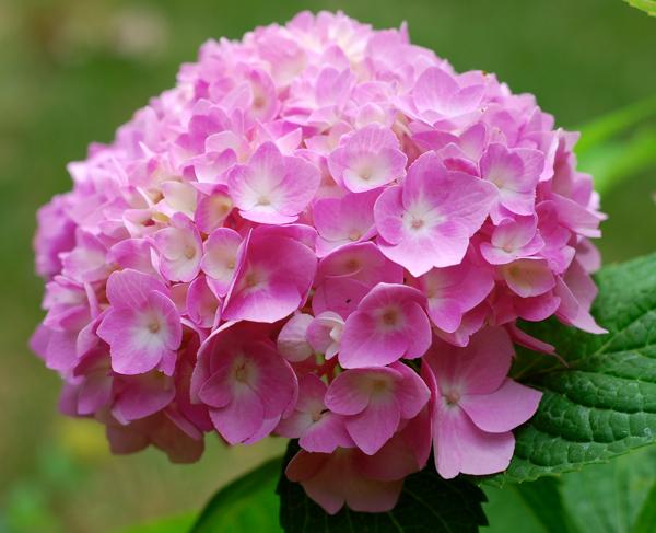 flowers25