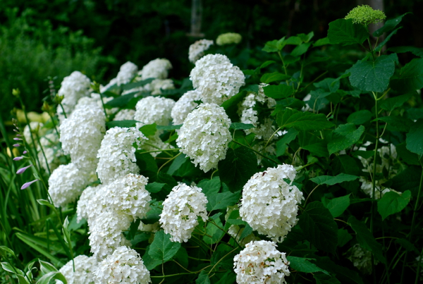 flowers28