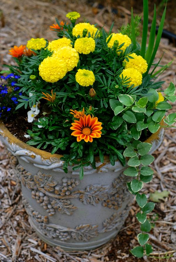 flowers32